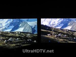 ICC PURIOS
